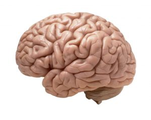 Boston brain injury lawyer